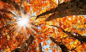 autumn-leaves-equinox-750x450